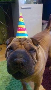rocco_urodziny