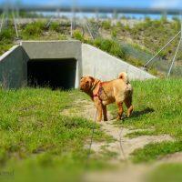 Aferka przed wejściem do tunelu dla dzikich zwierząt
