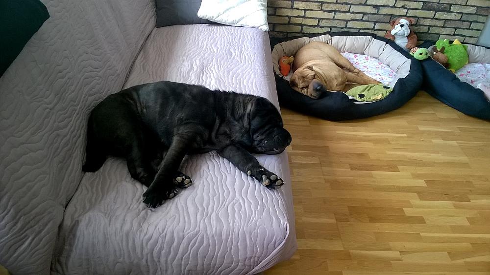 podstawowe zajęcie psa w domu
