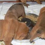 Śniadanie u Bonomielli